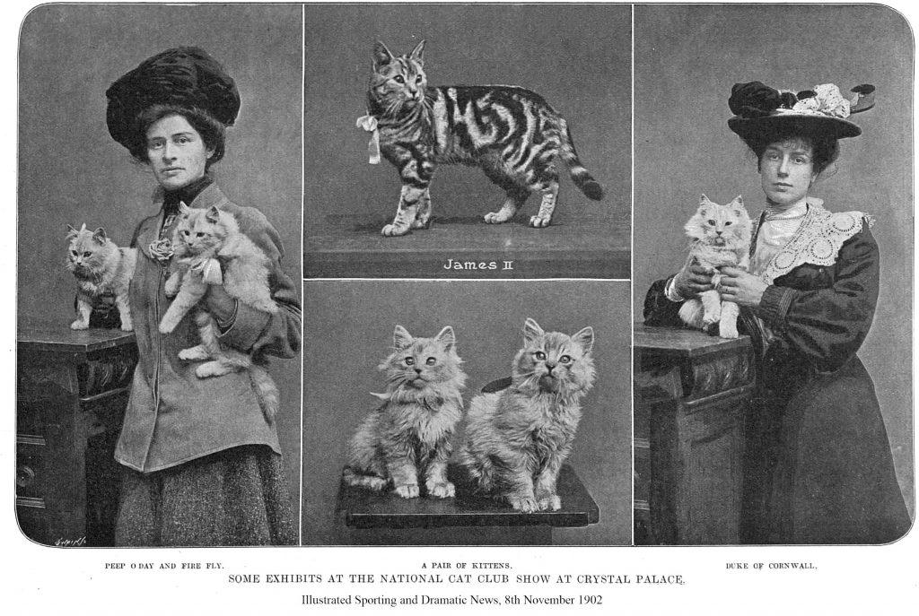 pisicile datând)